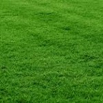 Intro to Lawn Care in Fairfax County, VA