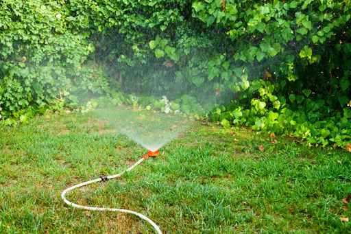 Quick Guide To Overseeding Your Northern Virginia Lawn