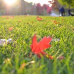 5 Tips for Prepping Your Charlotte, NC Lawn for Spring