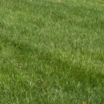 LawnStarter Survey: Lawn Care Providers Very Optimistic About 2016