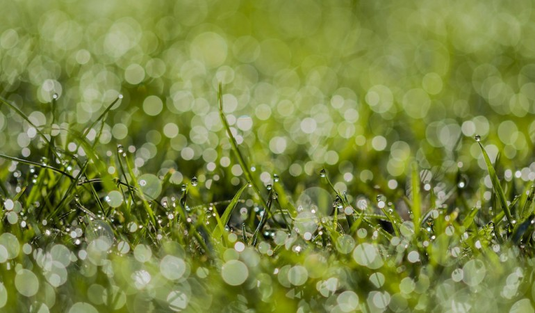 7 Watering Tips for Austin Lawns