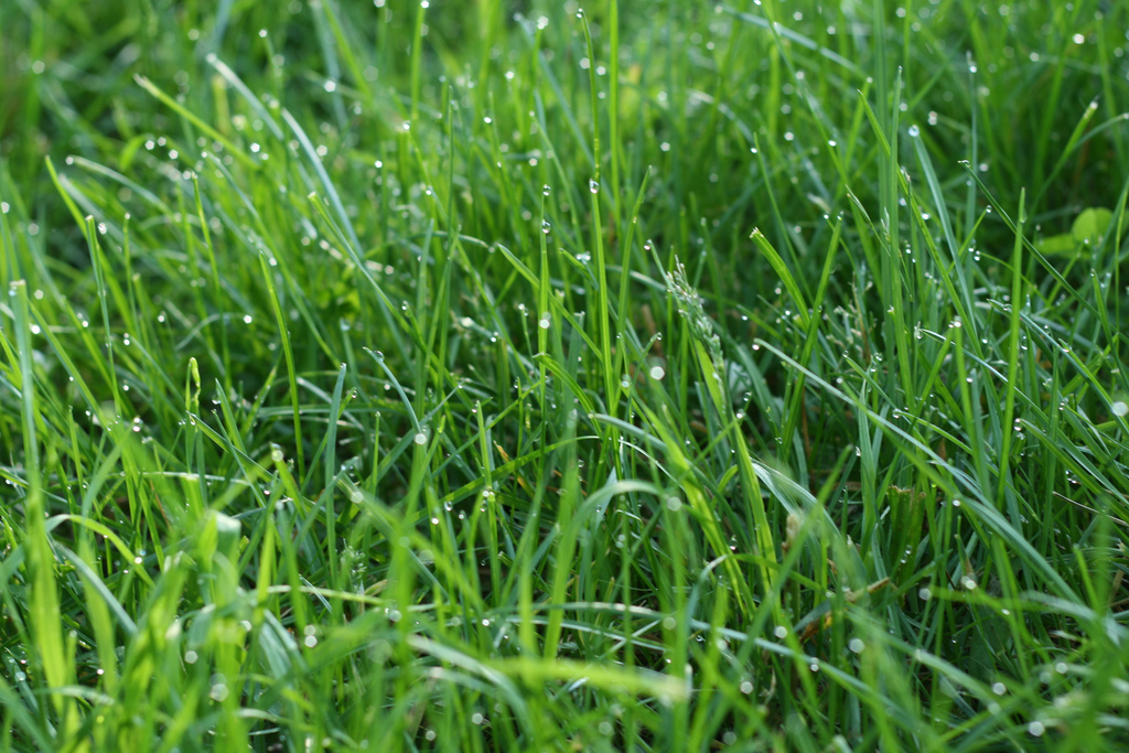 The best grass to establish a lawn in richmond va for Best grass for landscaping