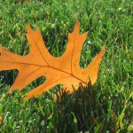 Fall Lawn Care Tips for Raleigh, N.C., Homeowners