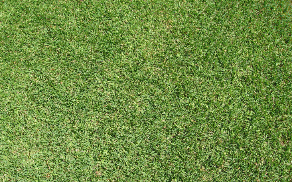 If You Are Looking To Redo Your Lawn And Are Wondering What Grass Types  Might Be Best For Your Yard, Look No Further. Here Is A Grass Types Guide  For ...