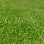 4 Tips for Spring Lawn Care in Baltimore, MD