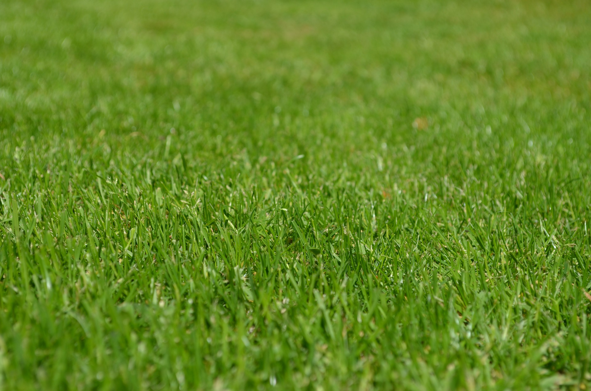 4 tips for spring lawn care in baltimore  md