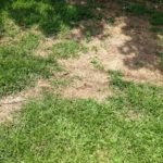 6 Lawn Pests in St. Louis, MO