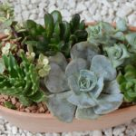 Plant Composition for Small Space Gardening