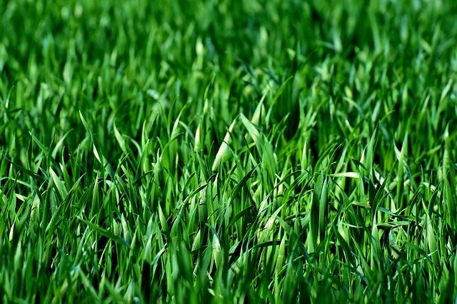 The Best Grass Types for Chicago, IL