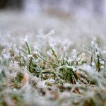 How To Winterize Your Lawn in Charleston, SC
