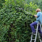 Myrtle Beach Shrub and Bush Pruning 101