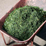 Don't Bag: Mulch Your Grass Clippings for a Healthy Lawn