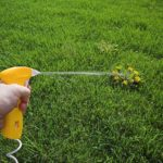 How to Spray Lawns for Weeds, Safely and Effectively