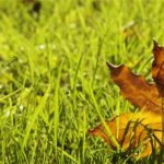 Fall Checklist for Yard and Lawn Care