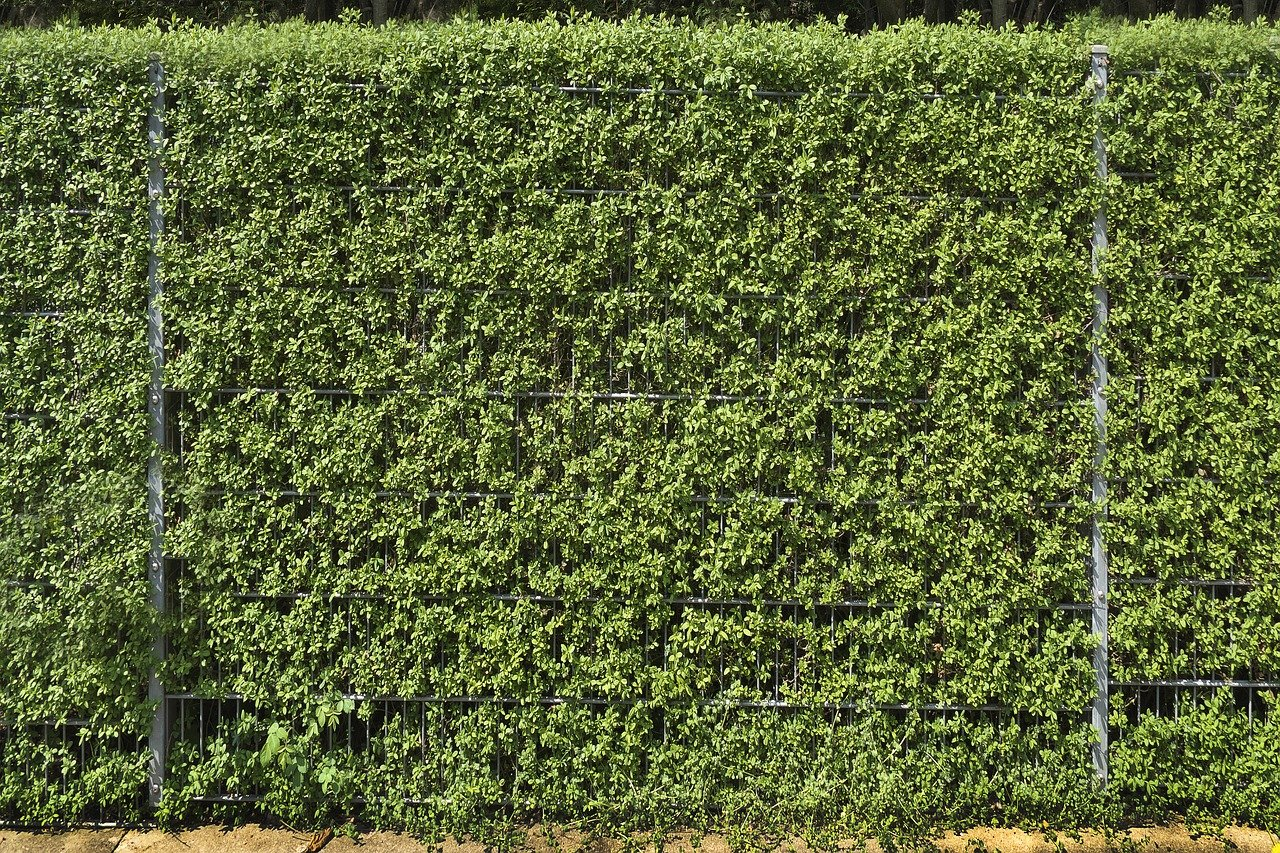 11 Of The Best Privacy Hedges Lawnstarter