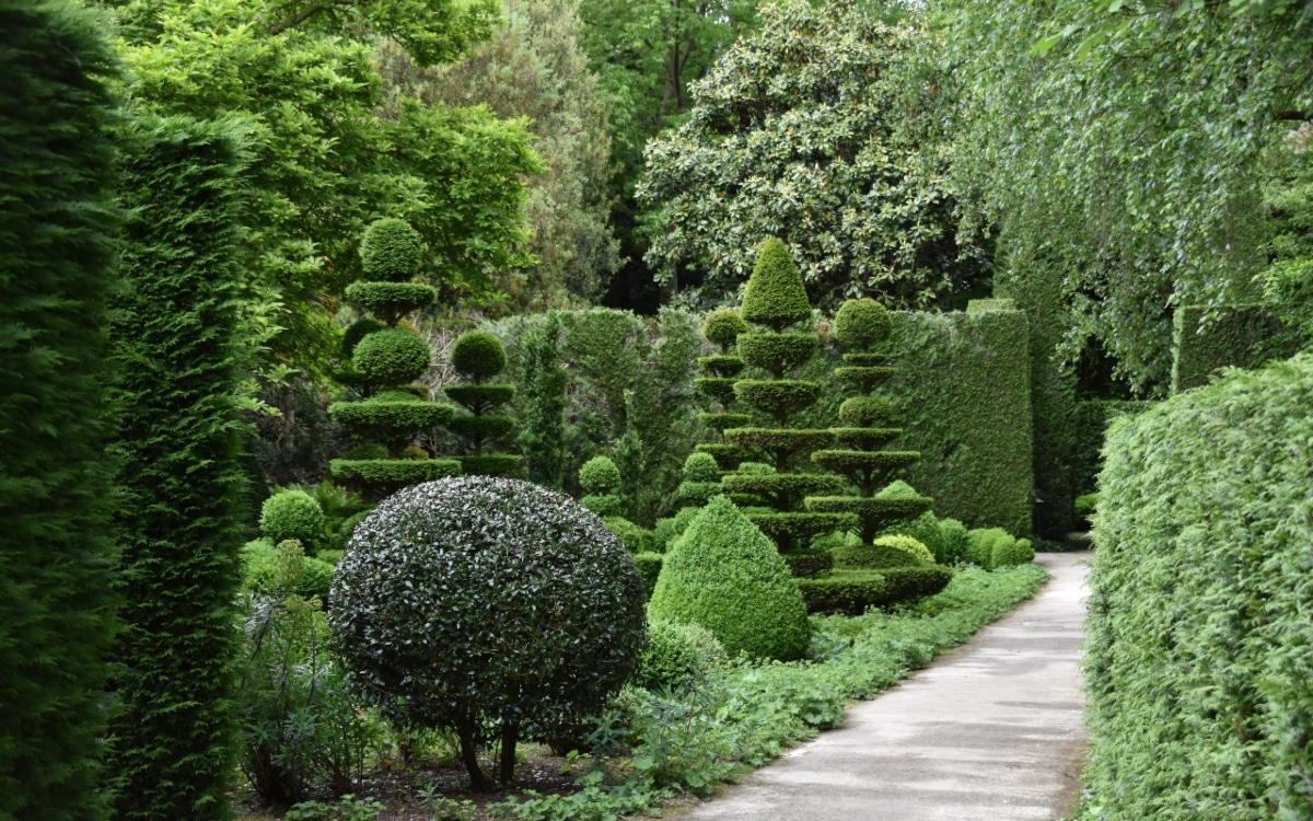 A variety of boxed shrubs of different shapes and heights