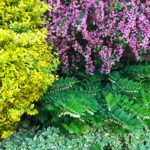 10 Flowering Shrubs to Make Your Landscape Pop