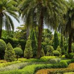 How to Landscape With Palm Trees in Jacksonville