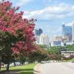 How to Landscape with Trees in Raleigh