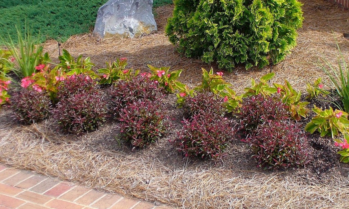 Landscape bed with shrubs surrounded by mulch