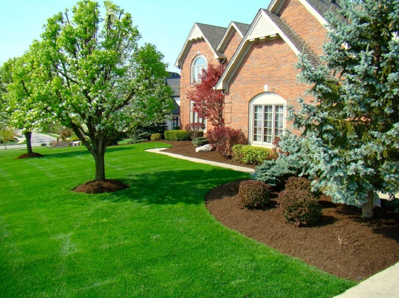 Front yard with tidy mulched landscape beds and trees