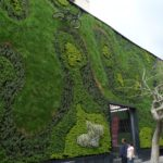 Green Walls: How to Create a Living Landscape (or Wallscape)