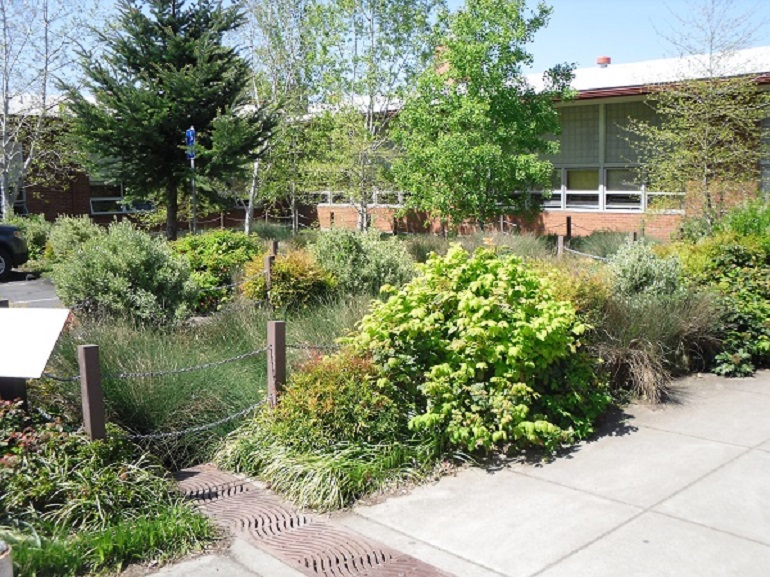 Rain garden in a ditch with trees, bushes, and grasses