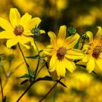 47 Native Plants for Florida: Flowers, Shrubs, and Trees