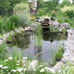 Water Gardens: Everything You Need to Know