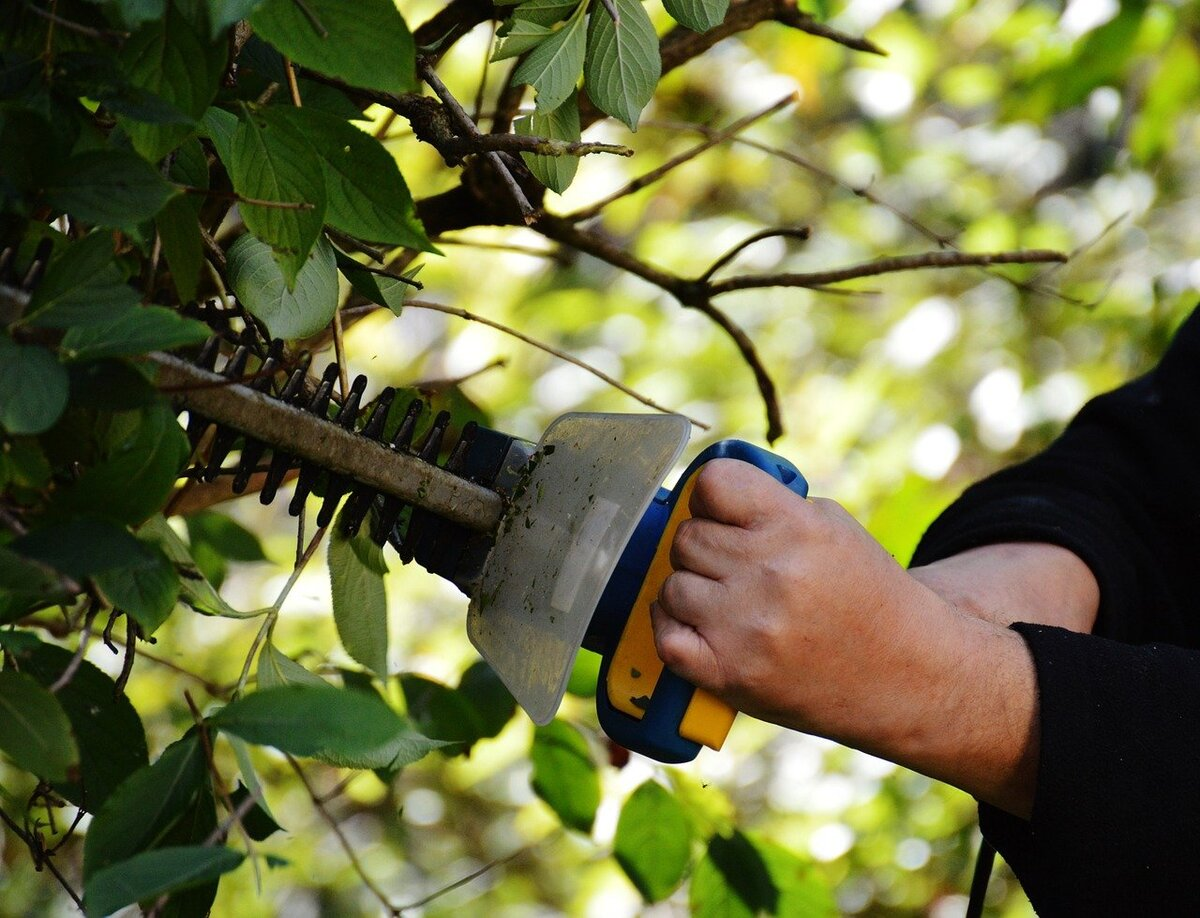 Man using a hedge trimmer to trim a tree.