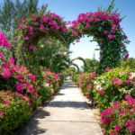 2021's Most Romantic Gardens in the U.S.