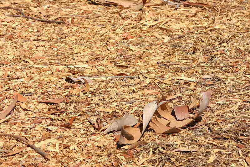 Mulch scattered in a large area