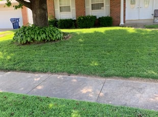 Candler Nc Lawn Care Service Lawn Mowing From 19 Rated Best 2021