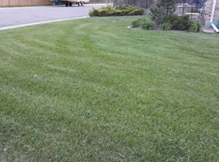 El Paso Tx Landscaping From 29 1 Landscapers Best Of 2021