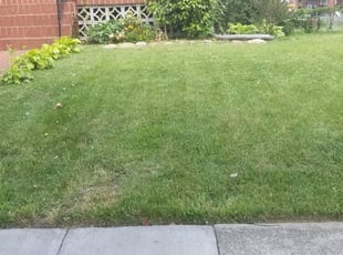 Silver Spring Md Landscaping From 29 1 Landscapers Best Of 2021