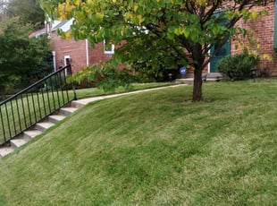 1 Silver Spring Md Lawn Care Service Lawn Mowing From 19 Best 2021