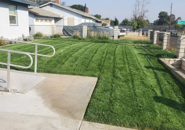 1 Seattle Wa Lawn Care Service Lawn Mowing From 19 Best 2021