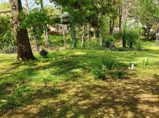 10 Best Lawn Care Services In Land O Lakes Fl 2020