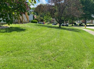 lawn care murfreesboro tn